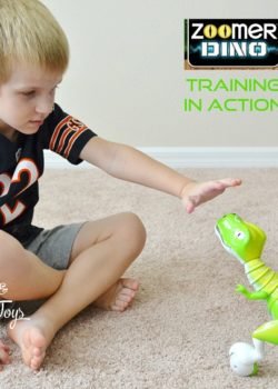 zoomer training in action