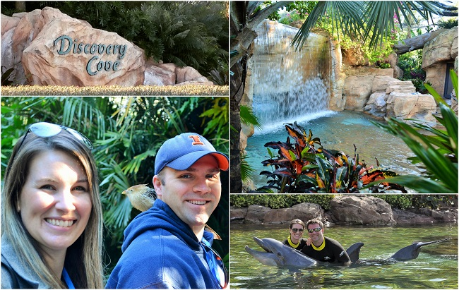Discovery Cove Experience