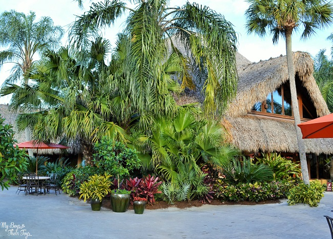 Discovery Cove buffet