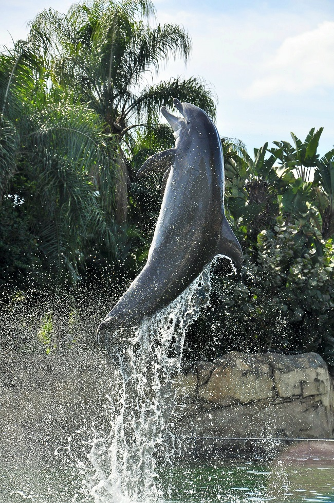 Discovery cove a tropical paradise day resort in orlando - Busch gardens florida resident pass ...