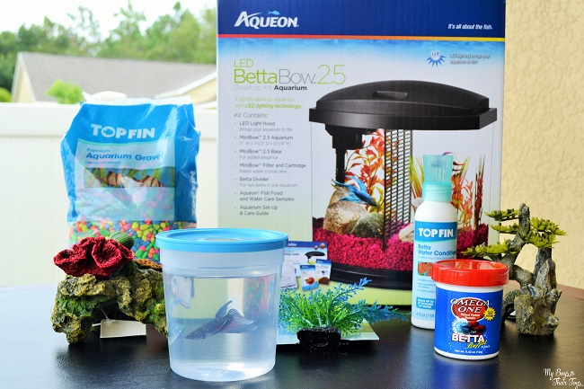 Fishing for responsibility at petsmart how to buy a pet fish for Where to buy pet fish