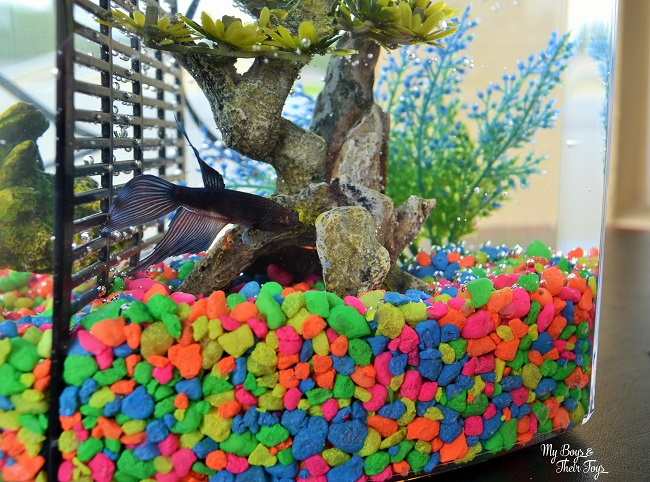 Fishing for Responsibility at PetSmart – How to Buy a Pet Fish