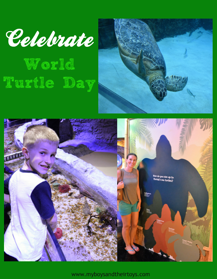 world turtle day The south carolina aquarium is celebrating world turtle day® on saturday, may  21 from 10-2 pm the annual observance was established by.