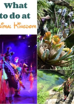 what to do at animal kingdom