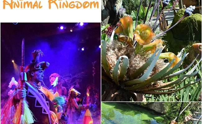 What to do at Animal Kingdom Park – Must See Attractions!